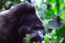 rwanda safari packages