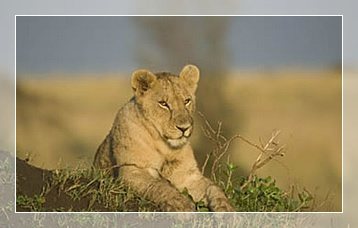 Kenyan safari packages